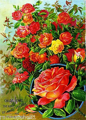 Child's Jewel Rose Vintage Flowers Seed Packet Catalogue Advertisement Poster