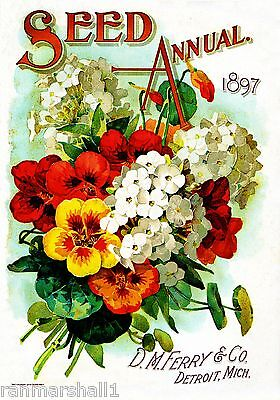 1897 Seed Annual Vintage Flowers Seed Packet Catalogue Advertisement Poster