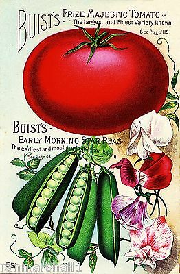 Buist's Tomato Vintage Vegetables Seed Packet Catalogue Advertisement Poster