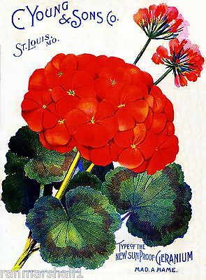 C. Young Geranium Vintage Flowers Seed Packet Catalogue Advertisement Poster