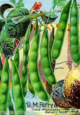 Ferry Lima Bean Vintage Vegetables Seed Packet Catalogue Advertisement Poster