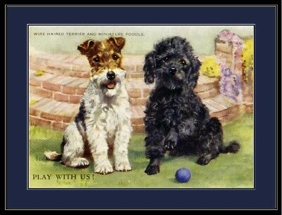 English Print Fox Terrier Poodle Puppy Dog Puppies Dogs Art Poster Picture