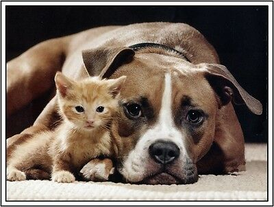 4 Dog Puppy Pit Bull Terrier Kitten Cat Cats dogs Greeting Notecards/ Envelopes