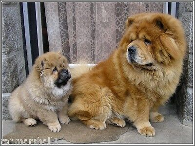 4 Set Chow Chow Dog Puppy Puppies Dogs Stationery Greeting Notecards / Envelopes