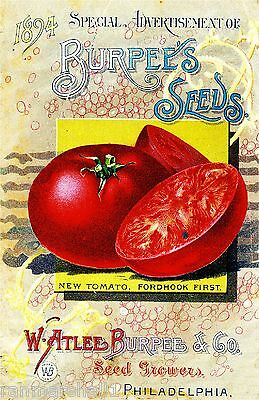 1894 Burpee Tomato Vintage Vegetable Seed Packet Catalogue Advertisement Poster