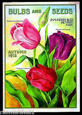 1912 - Ferry Tulips Vintage Flowers Seed Packet Catalogue Advertisement Poster