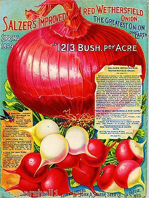 1899 Red Onion Vintage Vegetables Seed Packet Catalogue Advertisement Poster