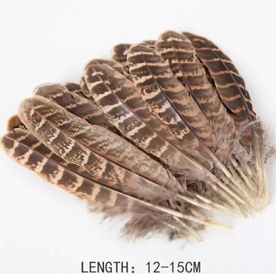 Bulk 20 Natural Female Pheasant Feathers 10-15cm DIY Craft Millinery Smudge Fan