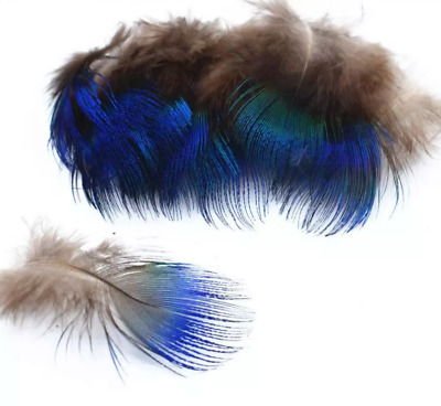 10 Amazing Natural Blue Peacock neck plumage feathers craft/millinery/jewelery