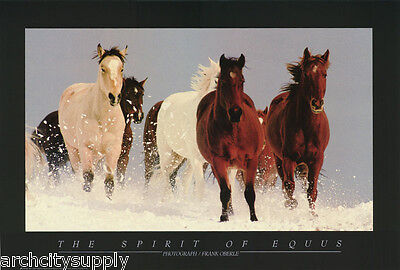 POSTER : PHOTO : SPIRIT OF EQUUS by FRANK OBERLE - FREE SHIPPING!   RP74 N
