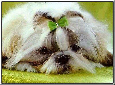 4 Set Shih Tzu Puppy Dog Dogs Puppies Greeting Stationery Notecards / Envelopes