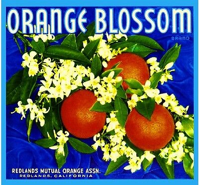 Redlands Orange Blossom #3 Orange Citrus Fruit Crate Label Art Print