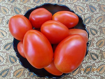 Tomato –  Perfect Roma Tomato (solanum lycopersicum) 20 Reliable Viable Seeds