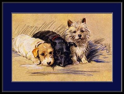Picture Print Sealyham Scottish Cairn Terrier Dog Dogs Puppy Puppies Poster Art