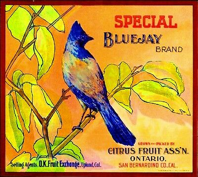 Ontario Special BlueJay Blue Jay Bird Orange Citrus Fruit Crate Label Art Print