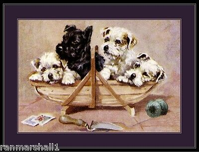 Print Scottish Sealyham Terrier Puppy Dog Dogs Art Vintage Picture Poster