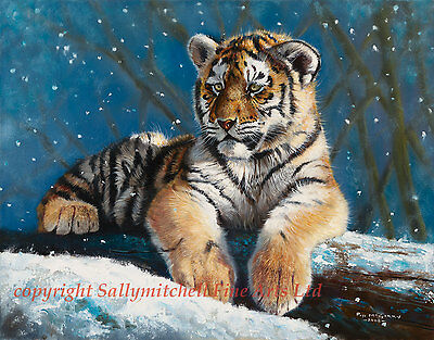 African Tiger, wildlife Christmas cards pack of 10 by Pip McGarry C333x