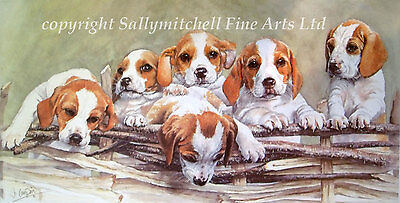 Beagle Hound puppy, hunting dog fine art print by JO CAMPIN. Over the Top