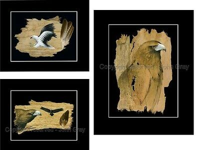 3 X Print Set . Bulk Buy   Prints - Signed By Artist - Eagles - Bark Art
