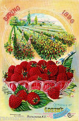1896 Loudon Raspberry Vintage Fruits Seed Packet Catalogue Advertisement Poster