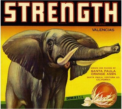 Santa Paula Ventura Strength Elephant Orange Citrus Fruit Crate Label Art Print