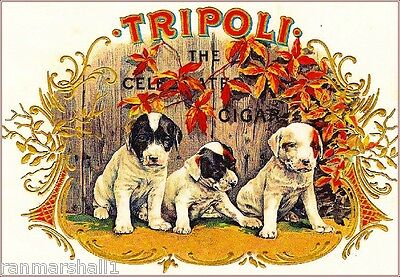 Tripoli Jack Russell Terrier Dogs Vintage Cigar Tobacco Box Crate Label Print