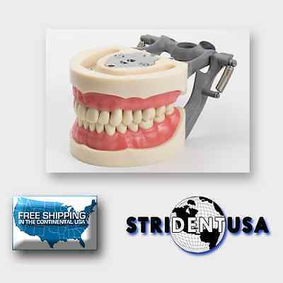 Dental Typodont Model 200 With Removable Teeth Kilgore Nissin Type 5 Free Molars