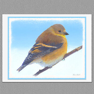 6 Female Goldfinch Wild Bird Blank Art Note Greeting Cards