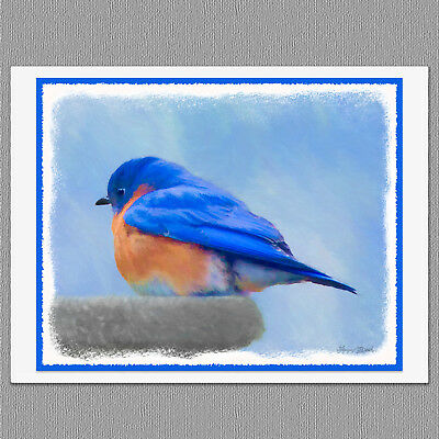 6 Bluebird Wild Bird Blank Art Note Greeting Cards