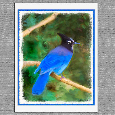 6 Steller's Jay Wild Bird Blank Art Note Greeting Cards