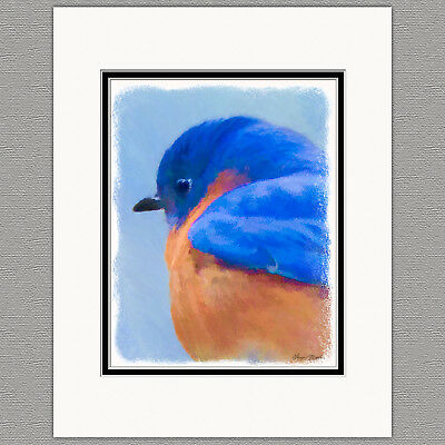 Bluebird WIld Bird Original Art Print 8x10 Matted to 11x14
