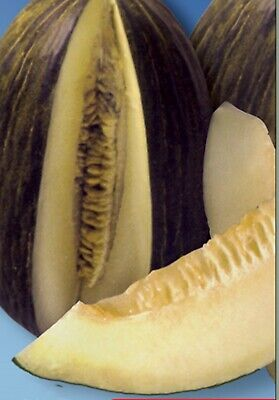Rare Seeds Honey Melon Tendral -  Spanish Selection