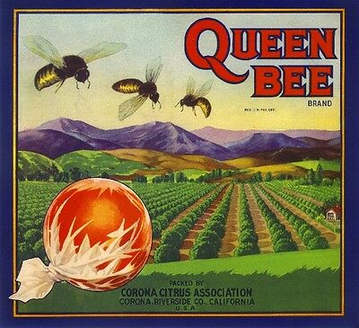Corona Queen Bee #1 Orange Citrus Fruit Crate Label Art Print