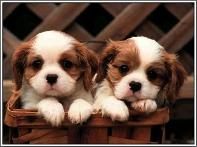 Pack of 4 Dog Dogs Puppy Puppies Cavalier King Charles Notecards /  Envelopes