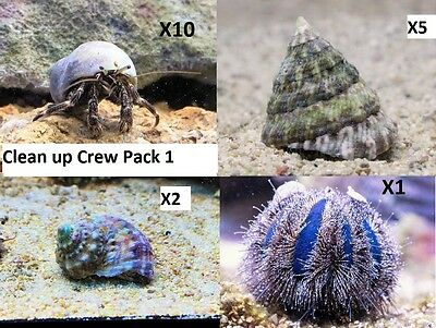 Clean Up Crew Pack 1 Turbo Snails, Hermit Crabs, Tuxedo Urchin, Ceriths. CUC
