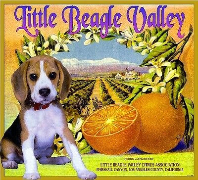 Marshall Canyon Little Beagle Valley Dog Orange Citrus Fruit Crate Label Print