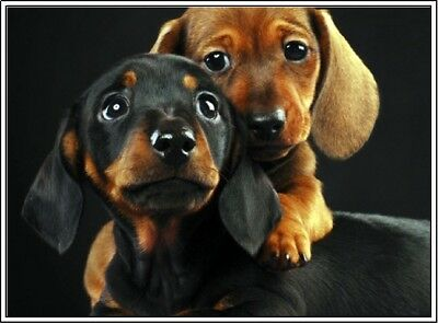 4 Dog Dachshund Puppy Dogs Puppies Stationery Greeting Notecards/ Envelopes