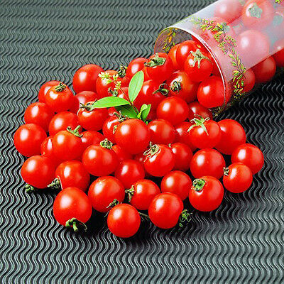 20 Red Small Tomato Seeds Lycopersicon Esculentum Organic Vegetables