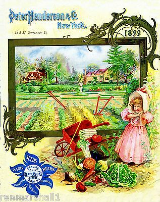 1899 Peter Henderson Vintage Flowers Seed Packet Catalogue Advertisement Poster