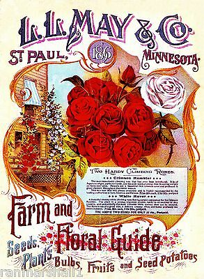 1896 May & Co. Roses Vintage Flowers Seed Packet Catalogue Advertisement Poster
