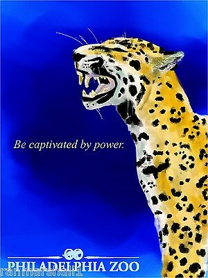 Jaguar Philadelphia Pennsylvania Zoo United States Advertisement Art Poster