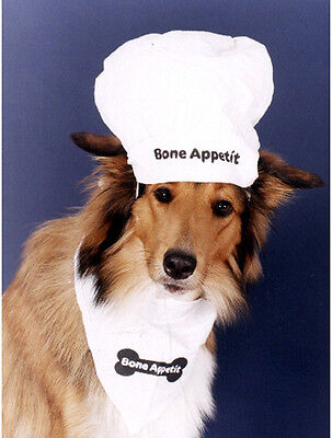 Pet Notecards Dog Collie in Chef's Hat