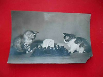 CHESS 1956 USSR Russian cat play in chess. Real photo postcards.