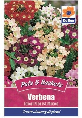 2 Packs of Verbena Ideal Florist Mixed Seeds, Approx 240 Seeds Per Pack
