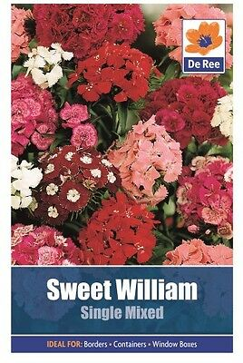 2 Packs of Sweet William Single Mixed Flower Seeds, Approx 230 Seeds Per Pack