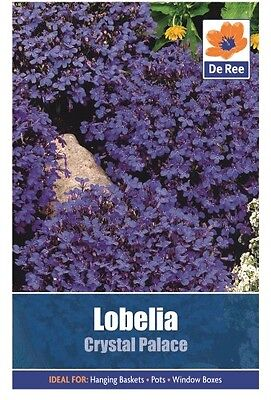 2 Packs of Lobelia Crystal Palace Flower Seeds, Approx 1866 Seeds per pack