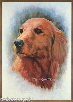 POSTER:ART DRAWING: GOLDEN RETREIVER  by M. L. HINDS - FREE SHIP#14-746  RP80 T
