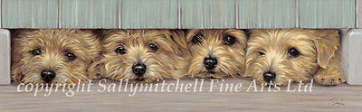 Norfolk Terrier fine art dog limited edition print by Paul Doyle