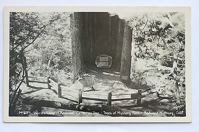 Old RPPC - WORLD'S LARGEST REDWOOD CATHEDRAL TREE, TREES OF MYSTERY PARK, CA