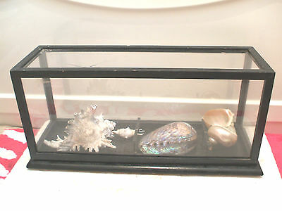 """Three Decorative Coral Items In Display Stand 9""""H 20""""L 7""""W"""